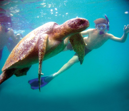 Guest snorkeling with sea turtle in Galapagos. DER from 2005