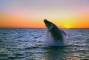 Iceland Humpback Whale