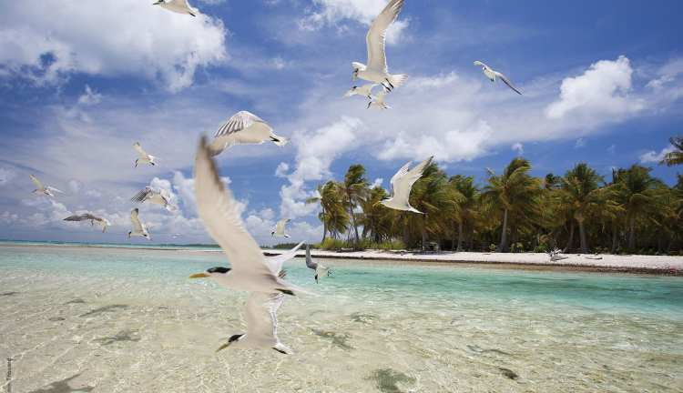 Silversea Tahiti