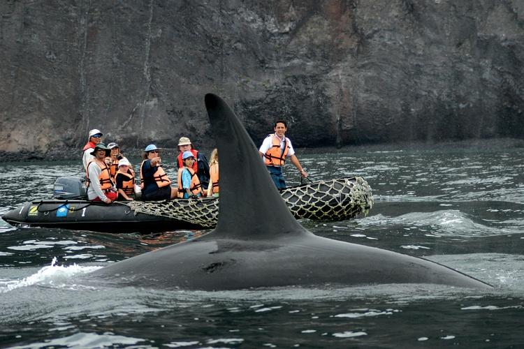 Galapagos Orcas with Lindblad