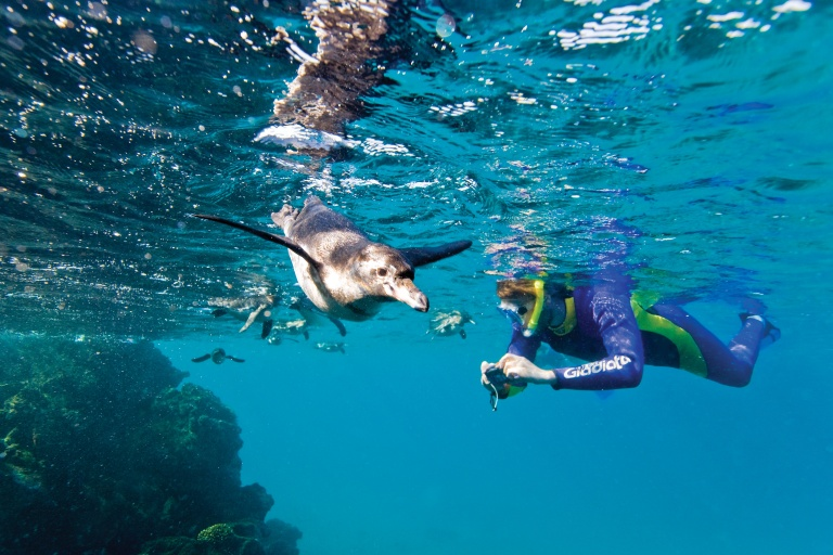 Galapagos Penguins with Lindblad