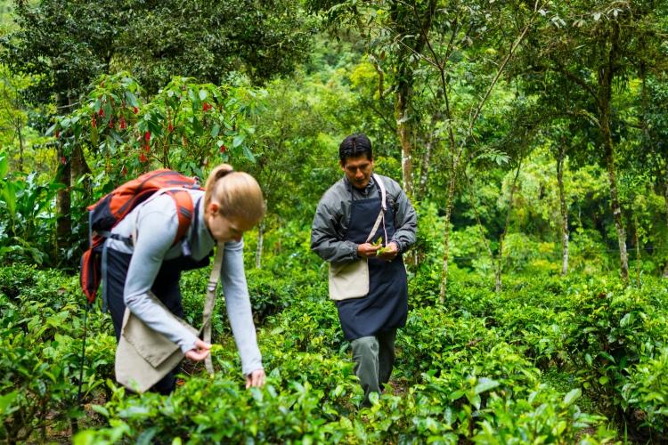 Inkaterra Machu Picchu Tea Plantation